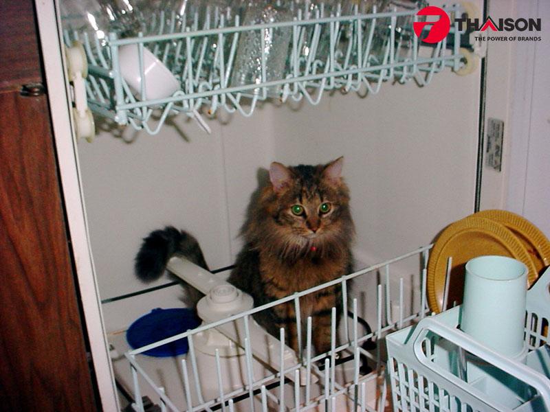 Máy rửa bát có tuổi thọ trung bình 8 năm